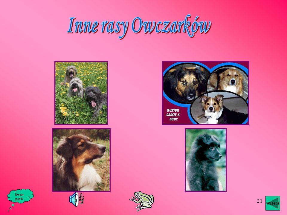 Inne rasy Owczarków Świat psów wstecz
