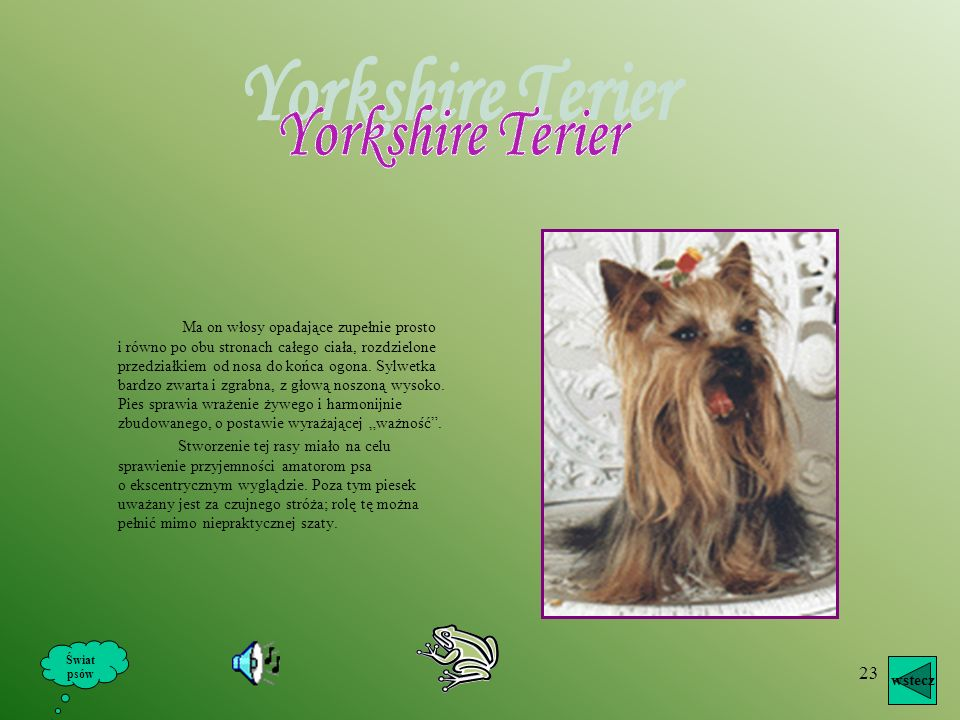 Yorkshire Terier