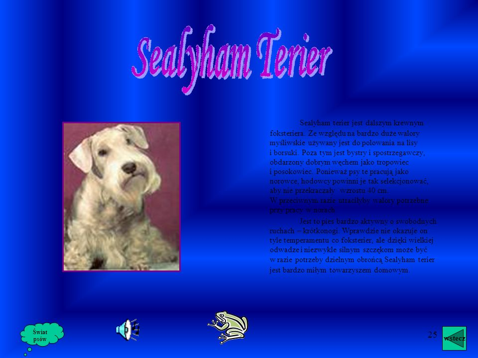 Sealyham Terier