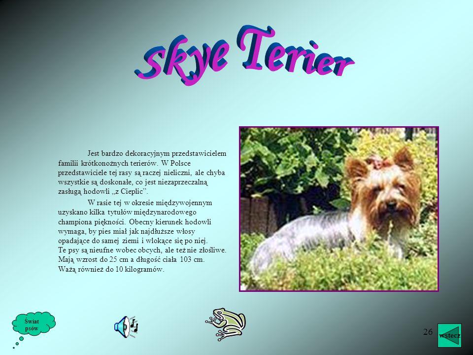 Skye Terier