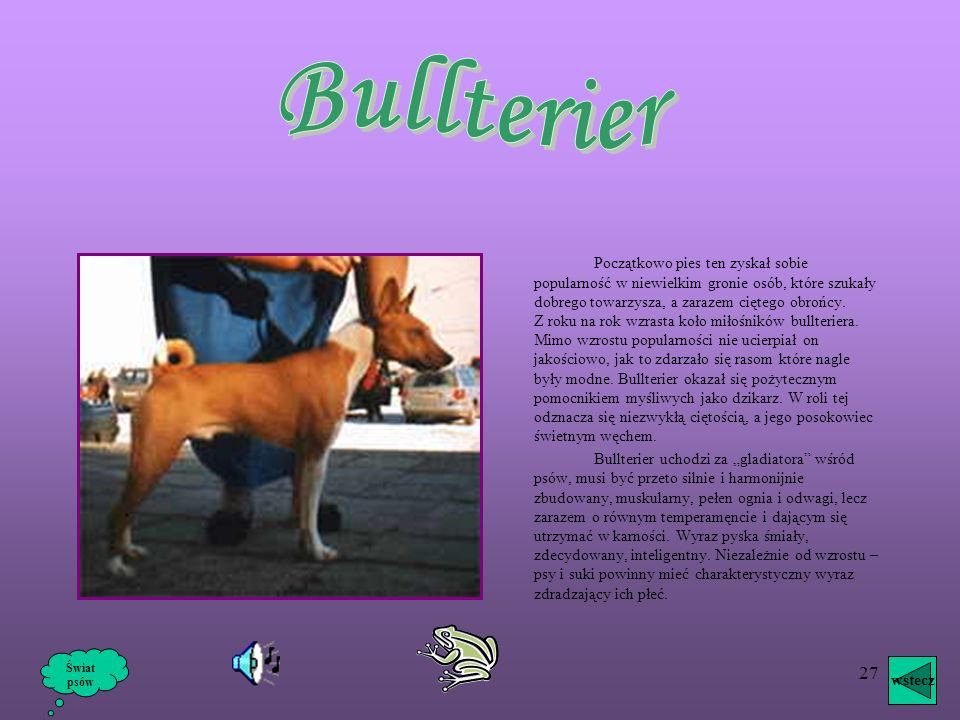 Bullterier
