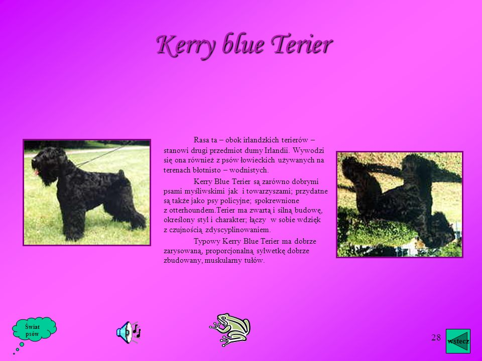 Kerry blue Terier