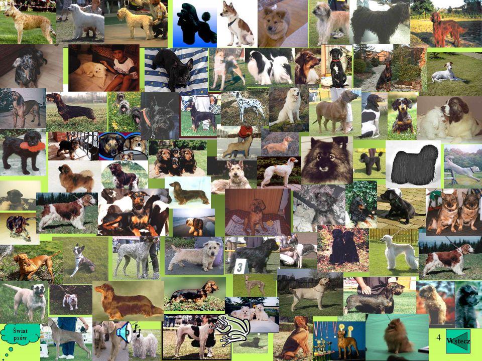 Świat psów Wstecz