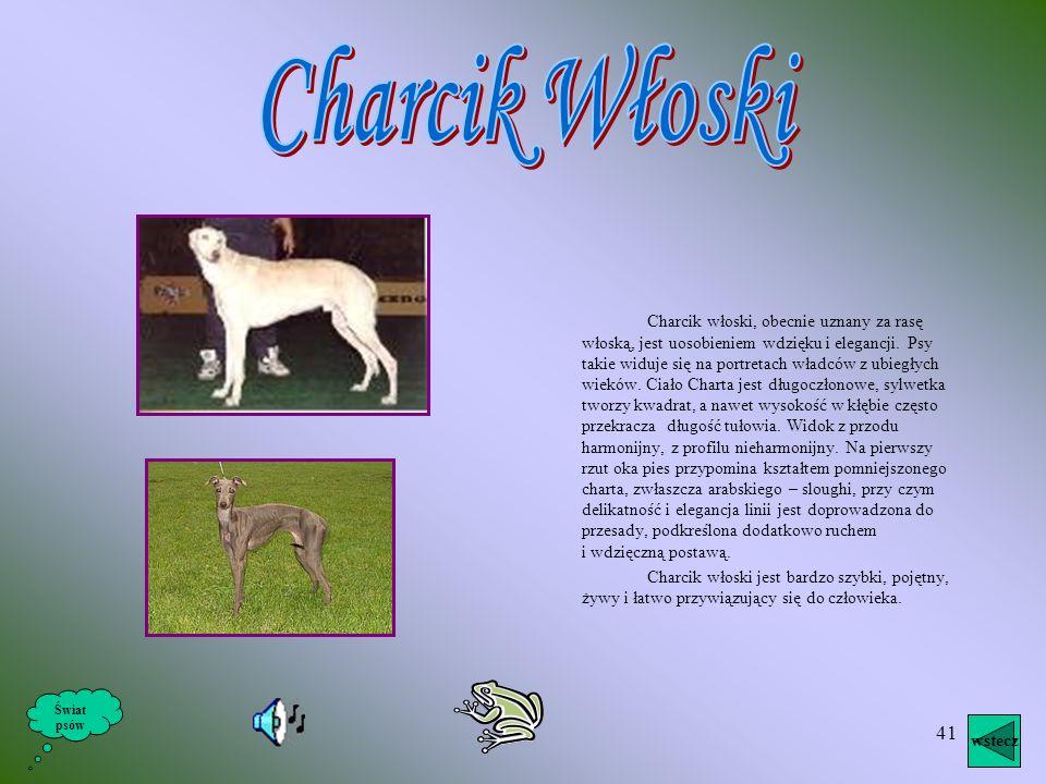 Charcik Włoski