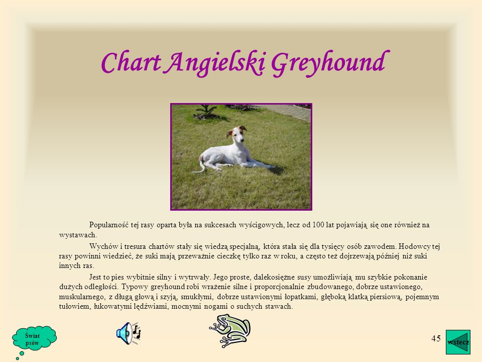 Chart Angielski Greyhound
