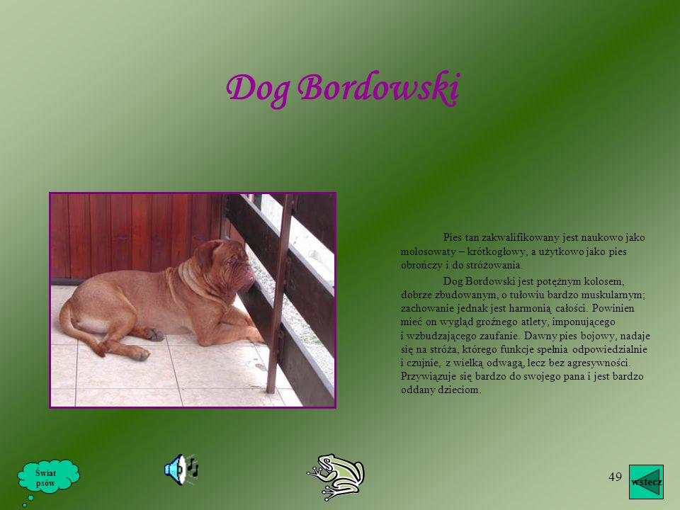 Dog Bordowski Pies tan zakwalifikowany jest naukowo jako molosowaty – krótkogłowy, a użytkowo jako pies obrończy i do stróżowania.