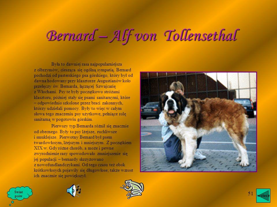Bernard – Alf von Tollensethal