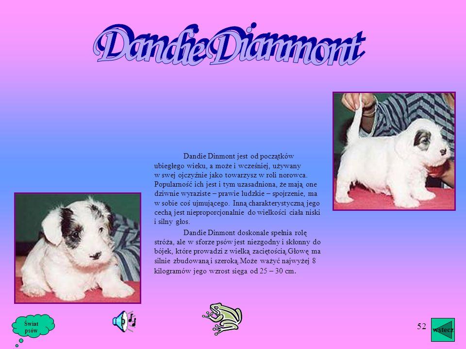 Dandie Dianmont