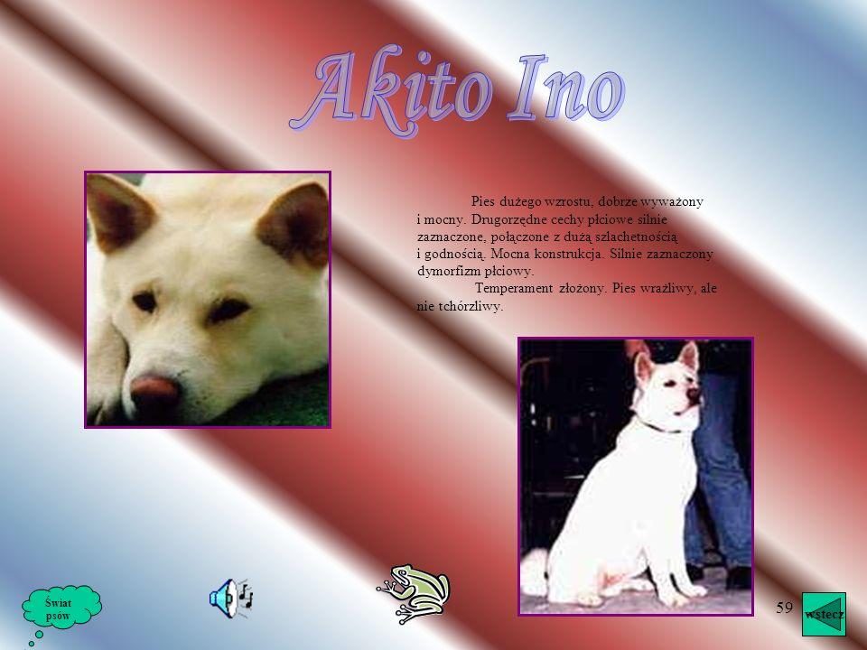 Akito Ino