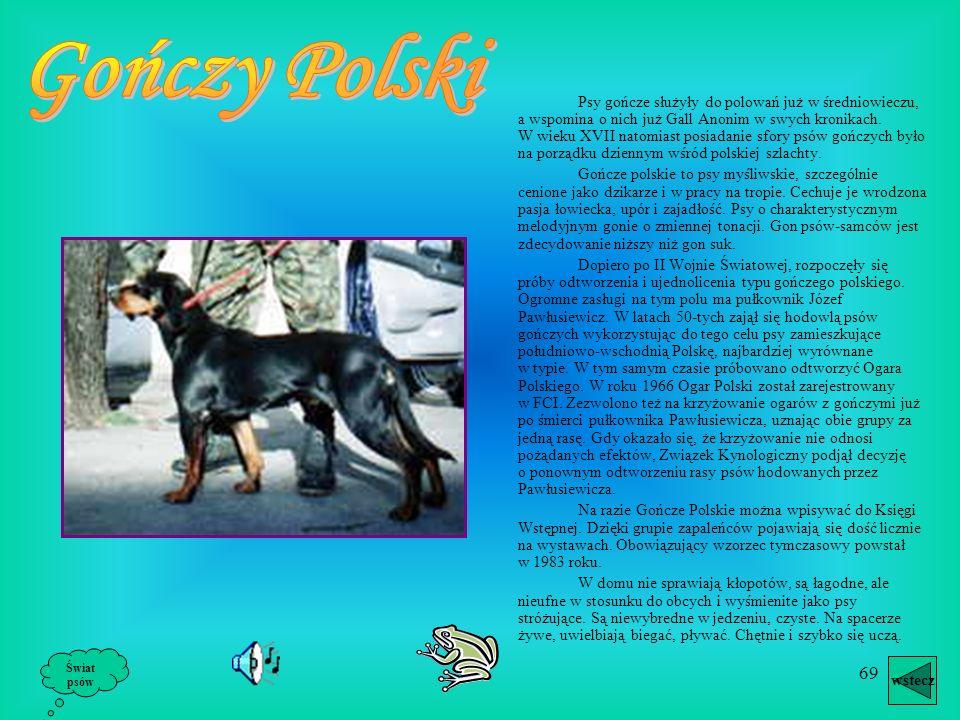 Gończy Polski