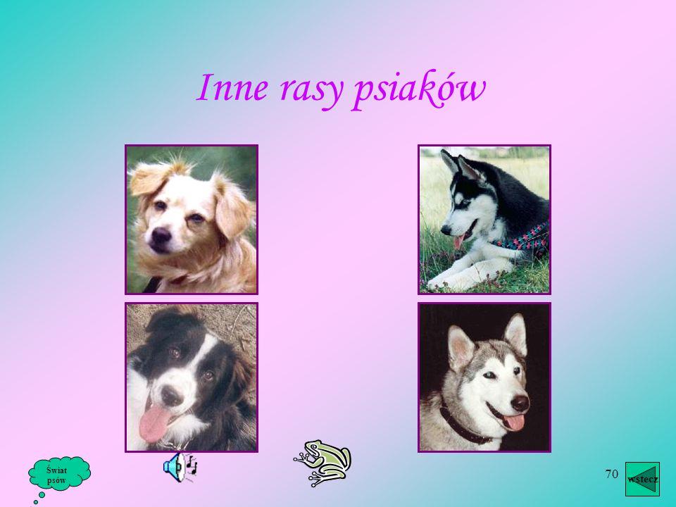 Inne rasy psiaków Świat psów wstecz
