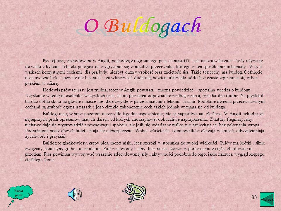 O Buldogach