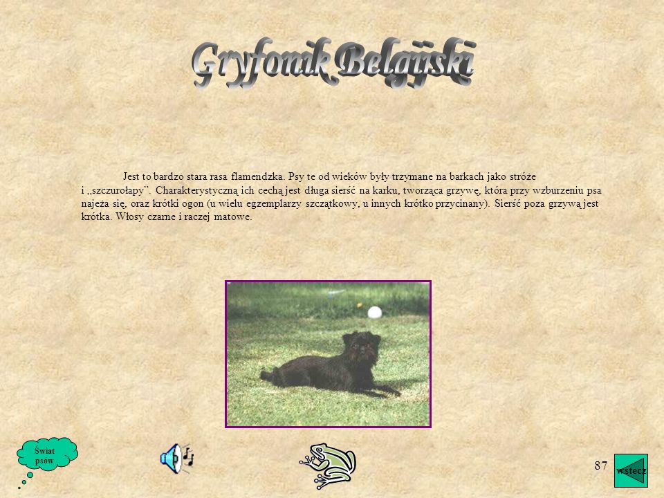 Gryfonik Belgijski