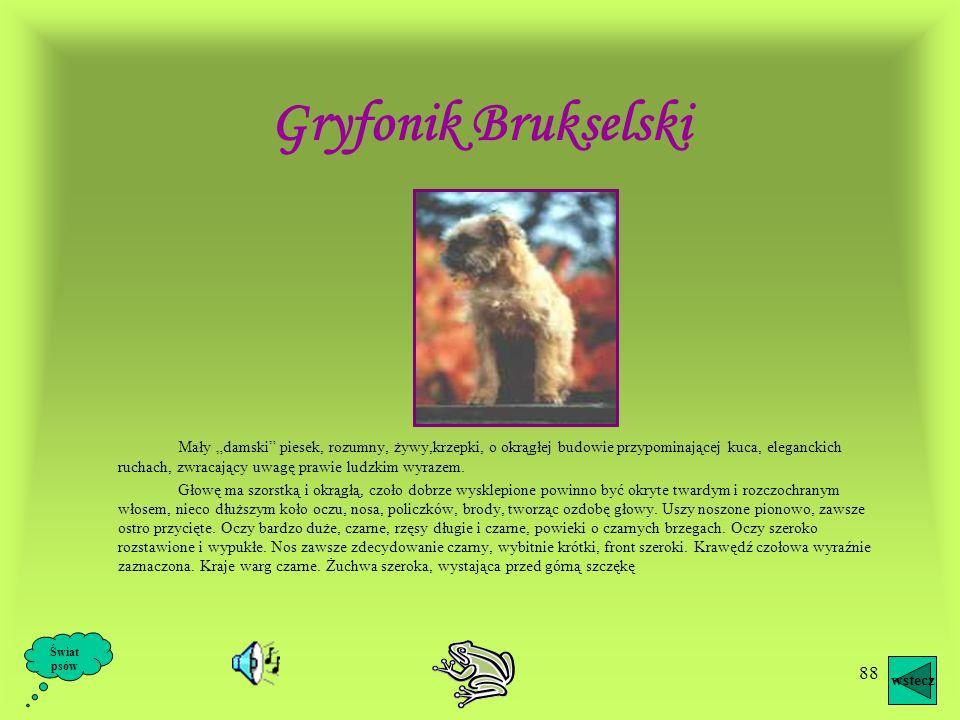 Gryfonik Brukselski