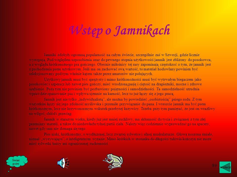 Wstęp o Jamnikach