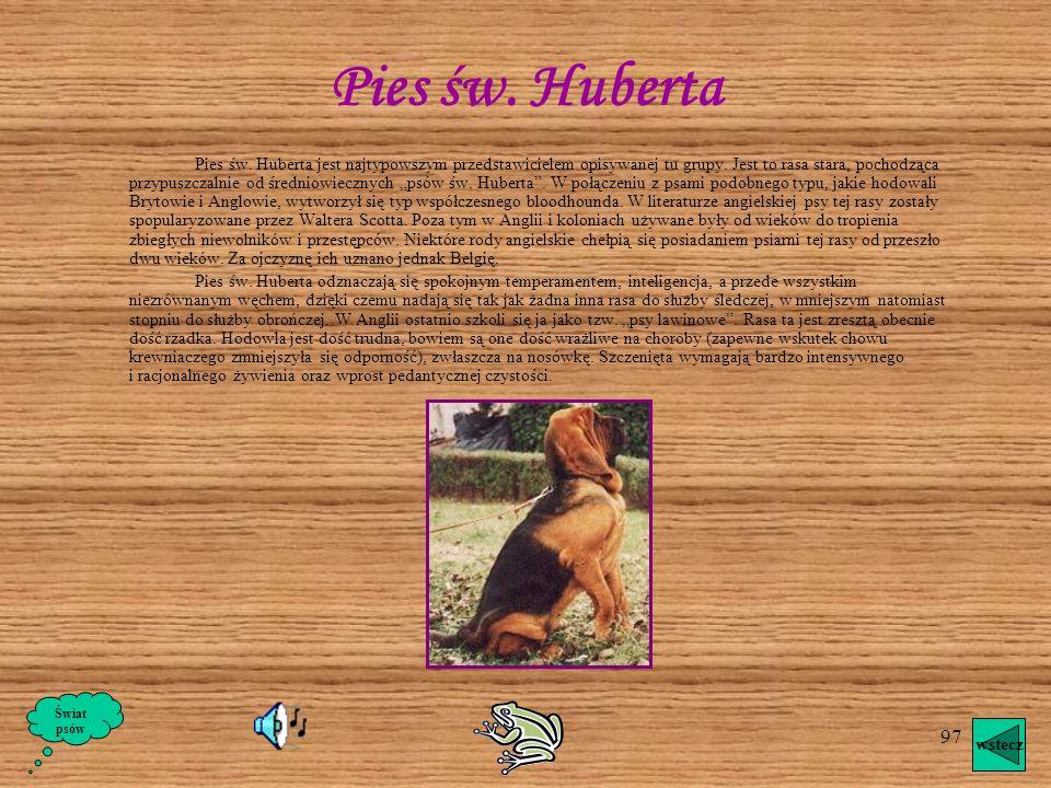 Pies św. Huberta