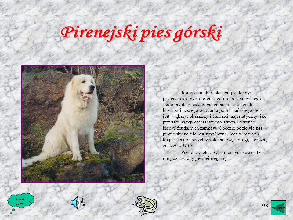 Pirenejski pies górski