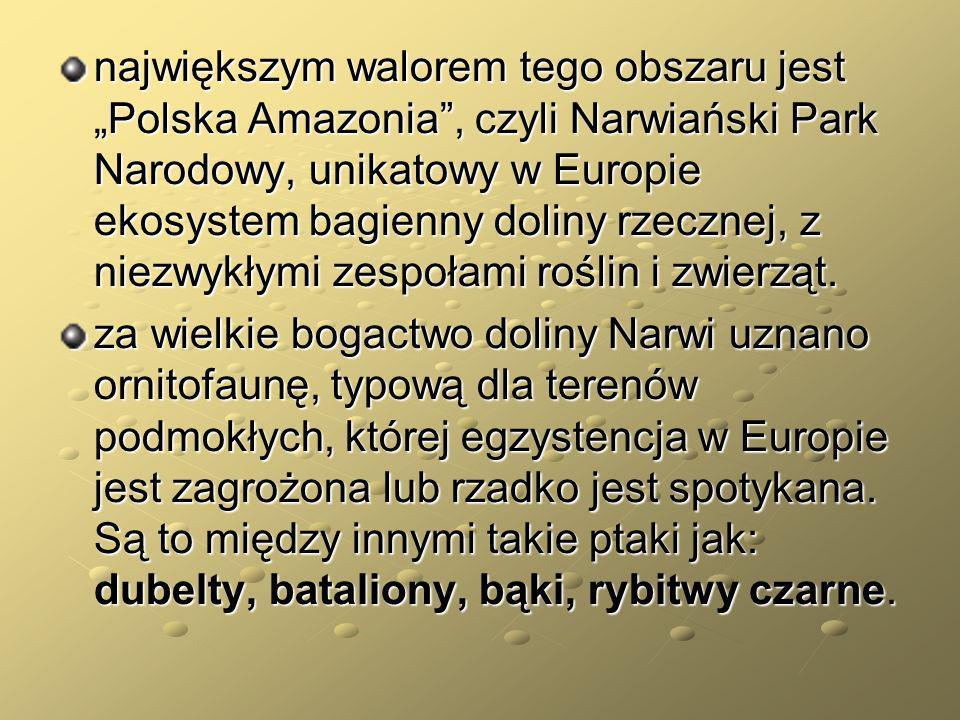 """największym walorem tego obszaru jest """"Polska Amazonia , czyli Narwiański Park Narodowy, unikatowy w Europie ekosystem bagienny doliny rzecznej, z niezwykłymi zespołami roślin i zwierząt."""