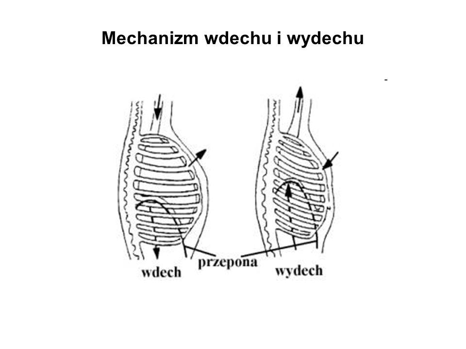 Mechanizm wdechu i wydechu