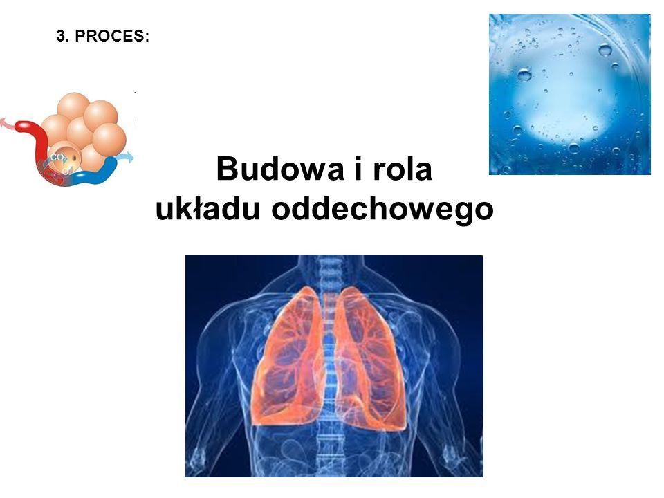 Budowa i rola układu oddechowego
