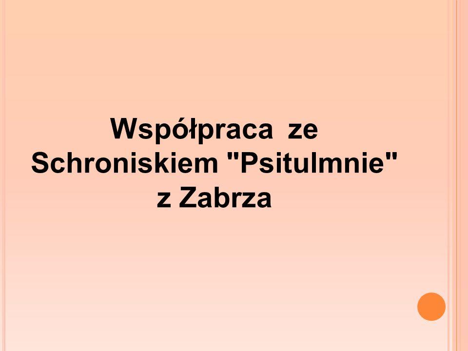 Współpraca ze Schroniskiem Psitulmnie z Zabrza