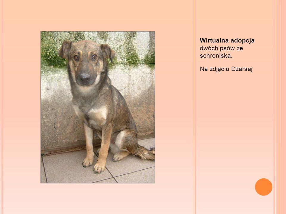 Wirtualna adopcja dwóch psów ze schroniska.