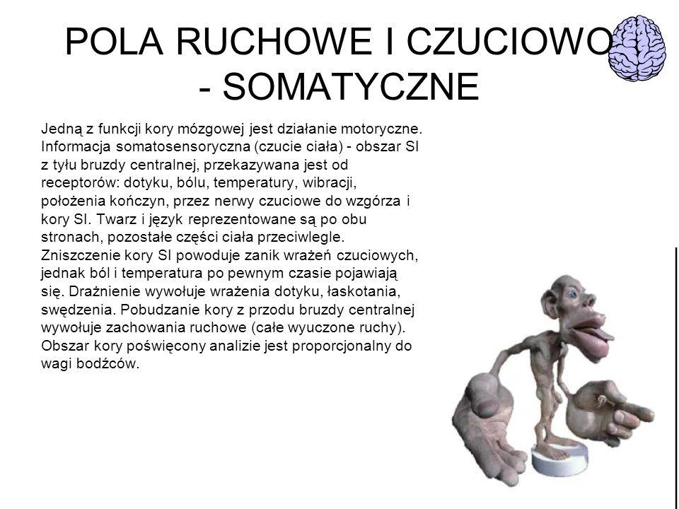 POLA RUCHOWE I CZUCIOWO - SOMATYCZNE