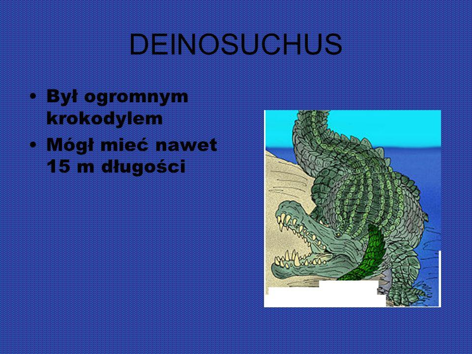DEINOSUCHUS Był ogromnym krokodylem Mógł mieć nawet 15 m długości