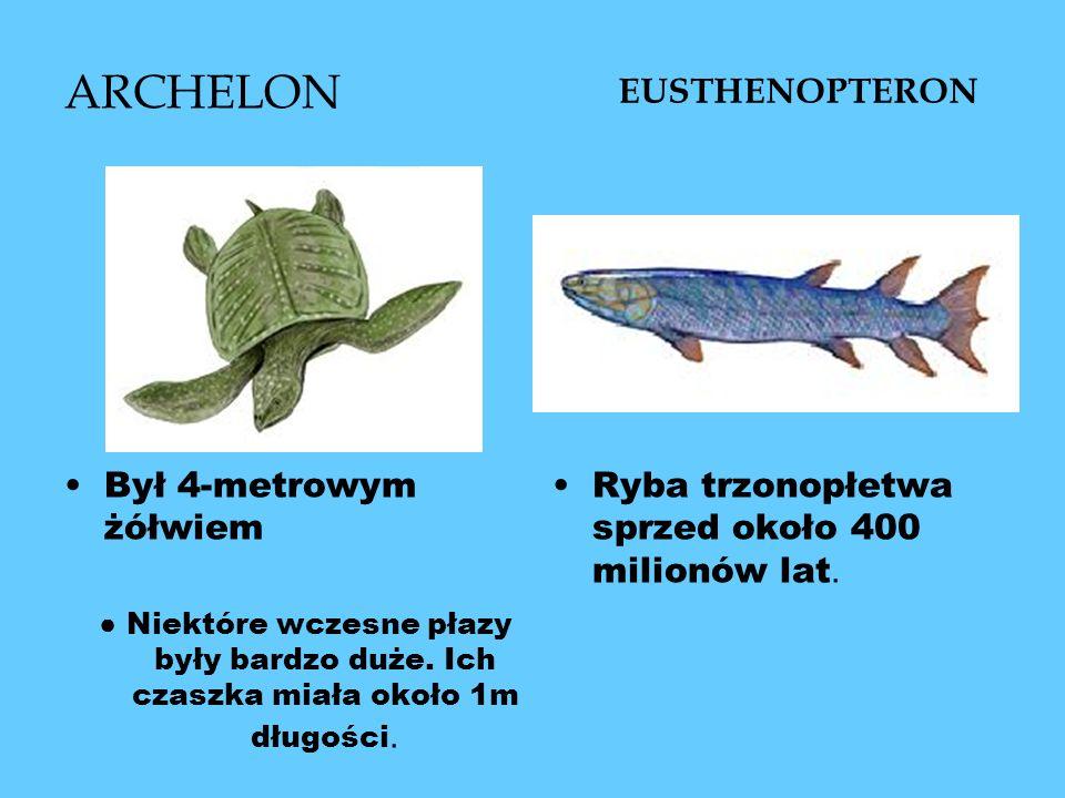 ARCHELON EUSTHENOPTERON Był 4-metrowym żółwiem