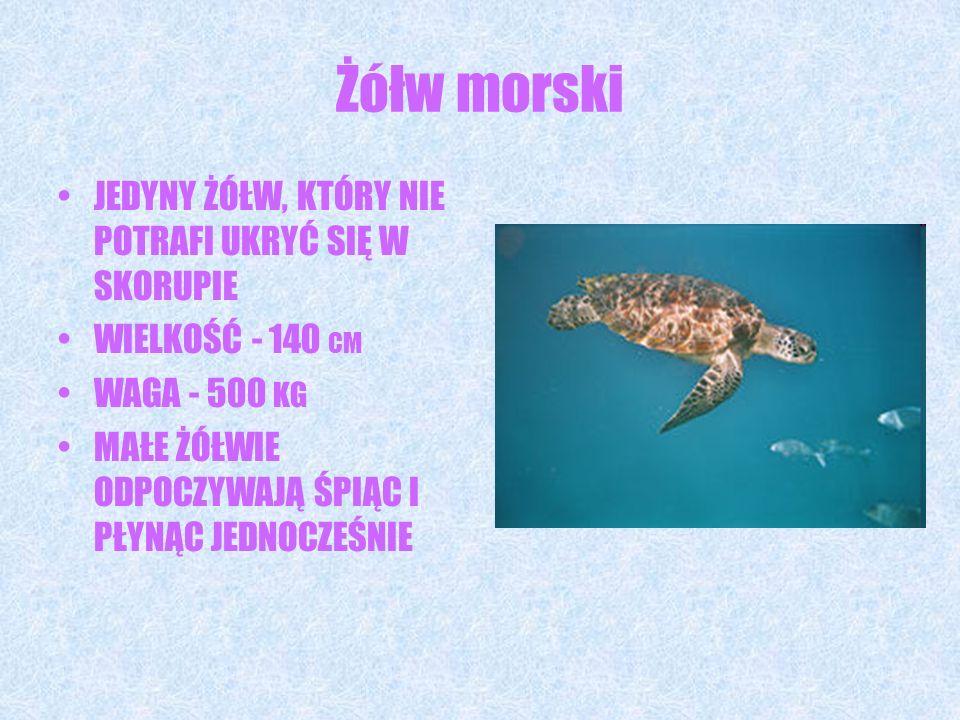 Żółw morski JEDYNY ŻÓŁW, KTÓRY NIE POTRAFI UKRYĆ SIĘ W SKORUPIE