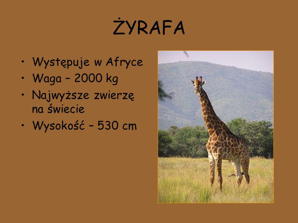 ŻYRAFA Występuje w Afryce Waga – 2000 kg Najwyższe zwierzę na świecie