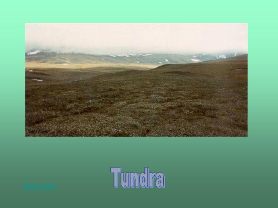 Tundra Spis treści