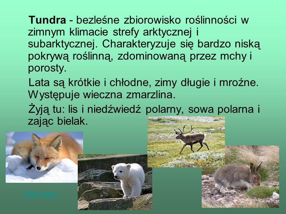 Żyją tu: lis i niedźwiedź polarny, sowa polarna i zając bielak.