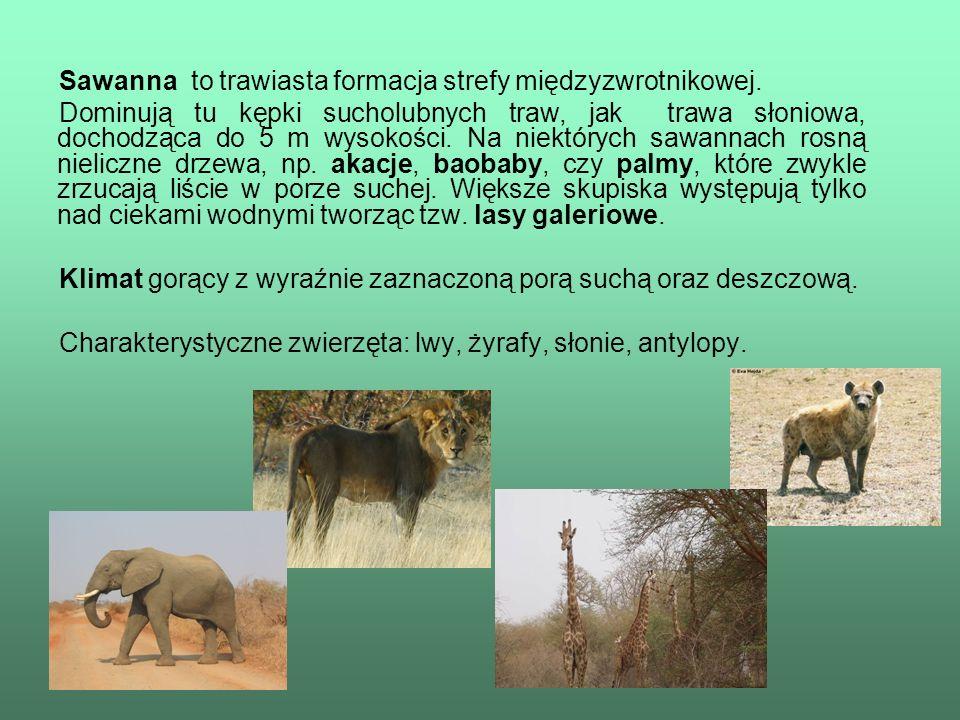Sawanna to trawiasta formacja strefy międzyzwrotnikowej.