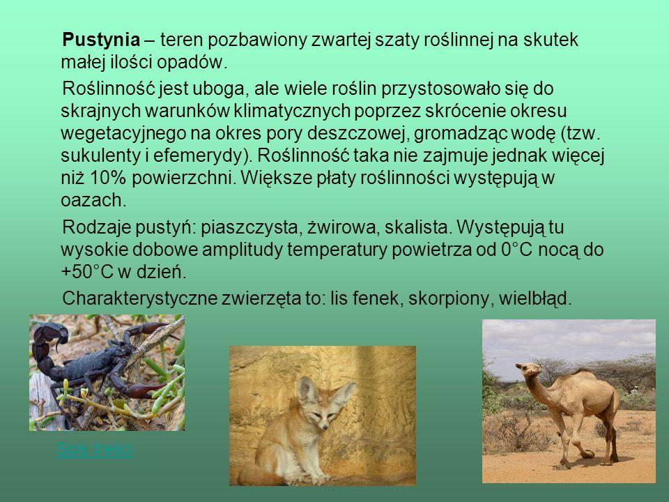 Charakterystyczne zwierzęta to: lis fenek, skorpiony, wielbłąd.