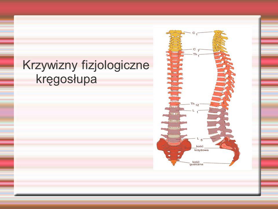 Krzywizny fizjologiczne kręgosłupa