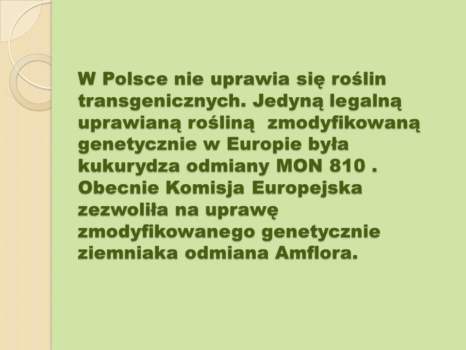 W Polsce nie uprawia się roślin transgenicznych