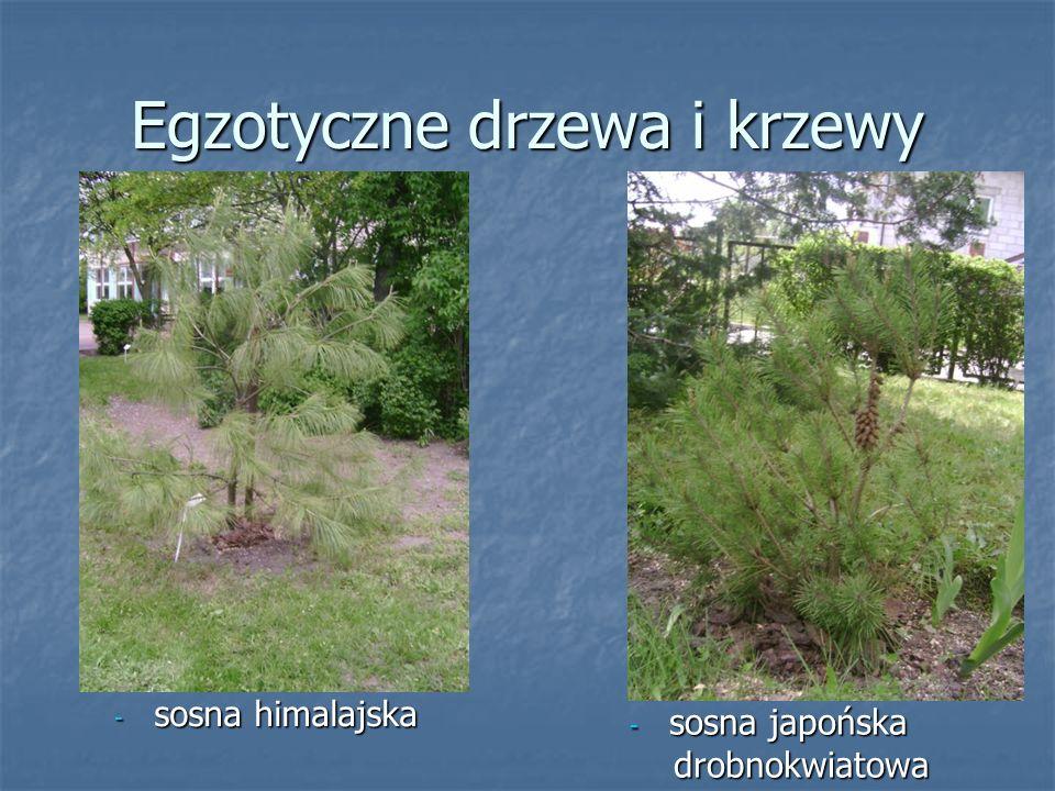 Egzotyczne drzewa i krzewy