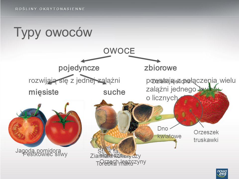 Typy owoców OWOCE pojedyncze zbiorowe mięsiste suche