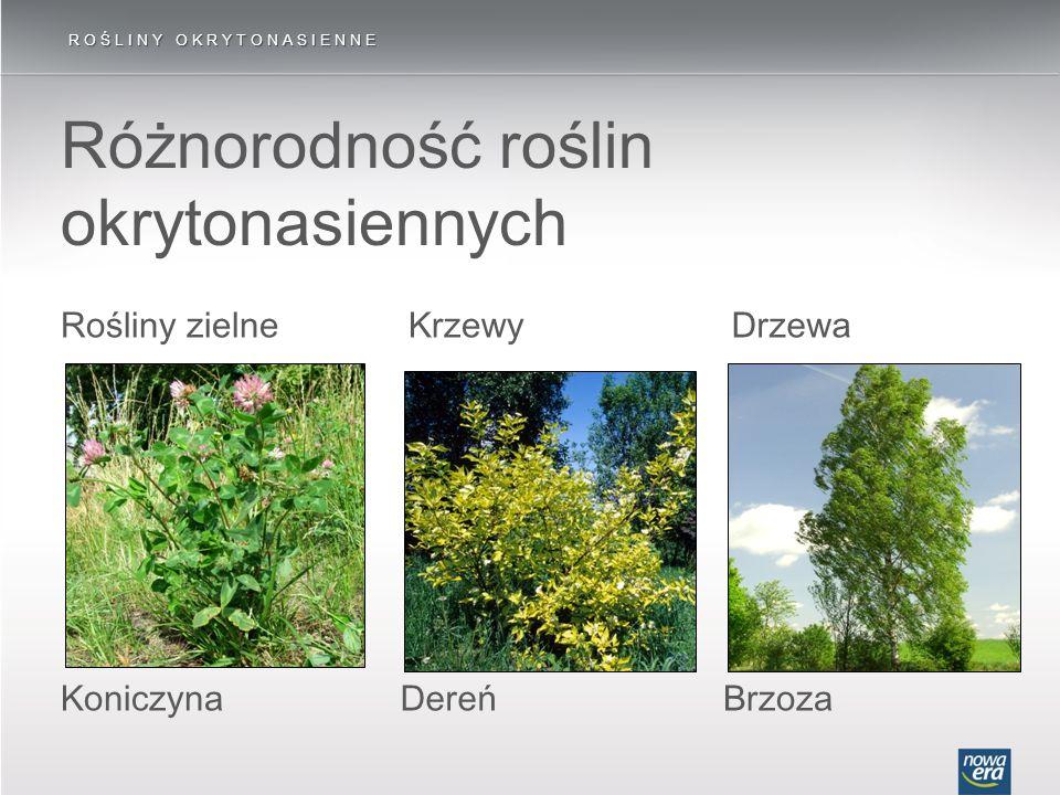 Różnorodność roślin okrytonasiennych