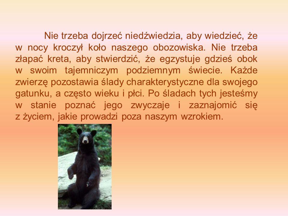 Nie trzeba dojrzeć niedźwiedzia, aby wiedzieć, że w nocy kroczył koło naszego obozowiska.