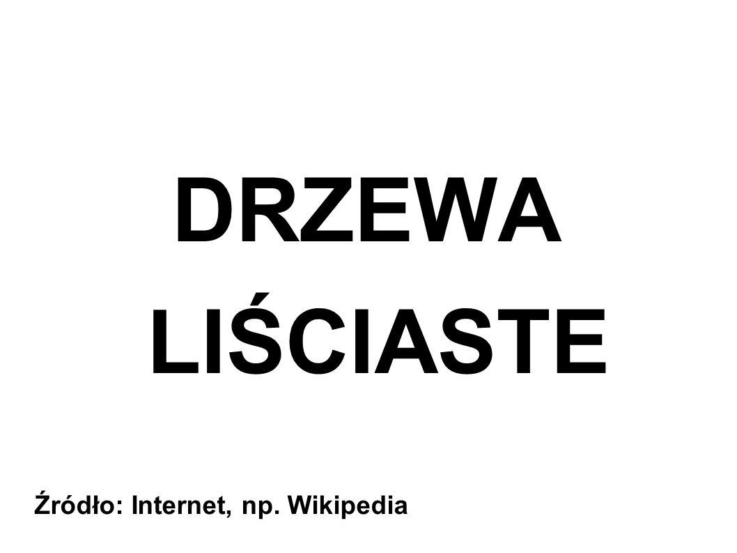 DRZEWA LIŚCIASTE Źródło: Internet, np. Wikipedia