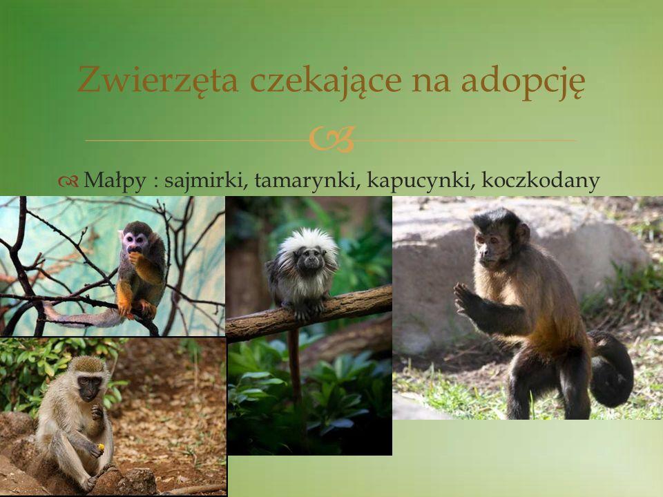 Zwierzęta czekające na adopcję