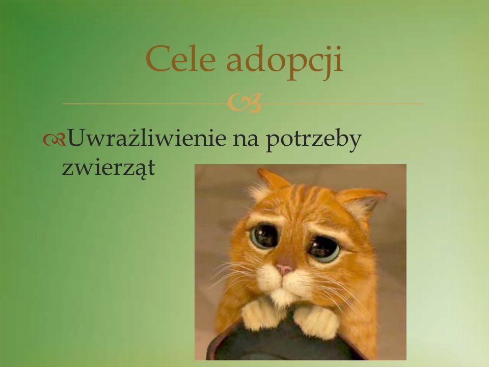 Cele adopcji Uwrażliwienie na potrzeby zwierząt