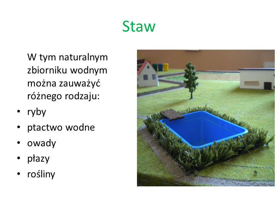 Staw W tym naturalnym zbiorniku wodnym można zauważyć różnego rodzaju: