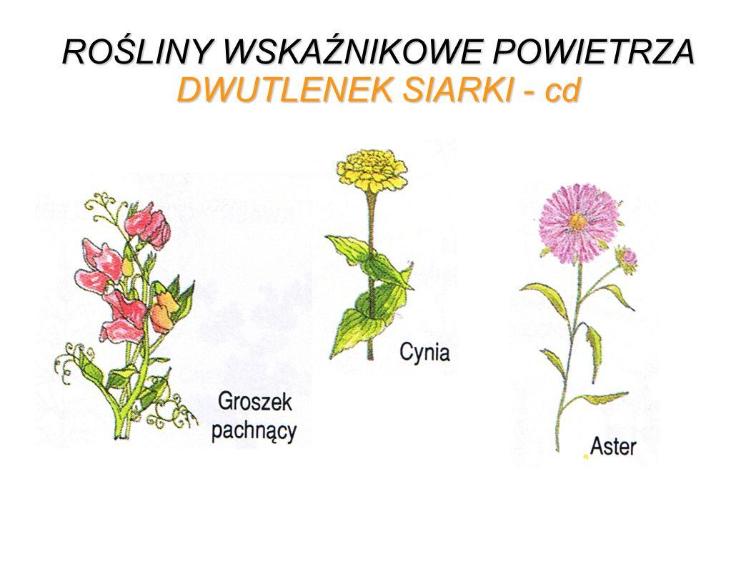 ROŚLINY WSKAŹNIKOWE POWIETRZA DWUTLENEK SIARKI - cd