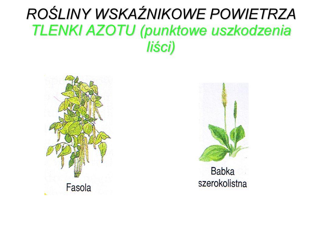 ROŚLINY WSKAŹNIKOWE POWIETRZA TLENKI AZOTU (punktowe uszkodzenia liści)