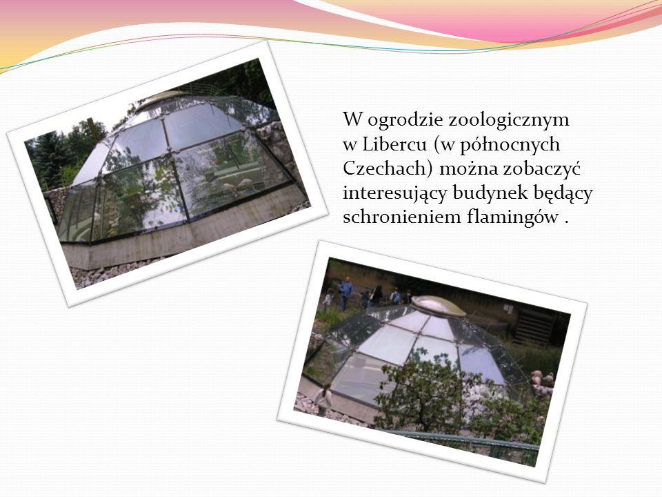 W ogrodzie zoologicznym w Libercu (w północnych Czechach) można zobaczyć interesujący budynek będący schronieniem flamingów .