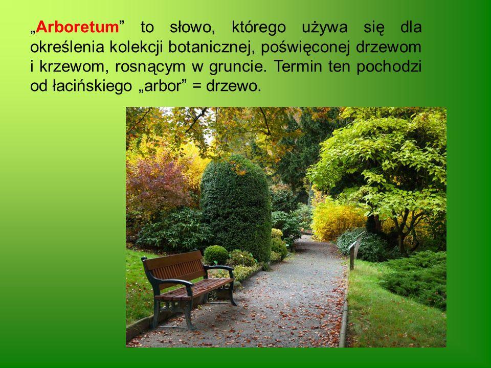 """""""Arboretum to słowo, którego używa się dla określenia kolekcji botanicznej, poświęconej drzewom i krzewom, rosnącym w gruncie."""