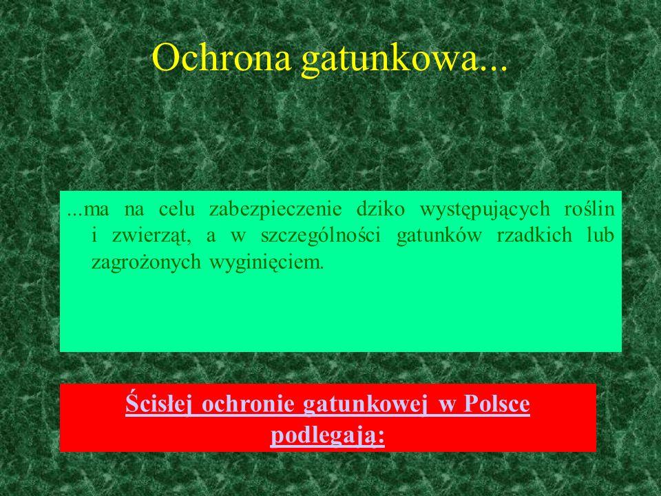 Ścisłej ochronie gatunkowej w Polsce podlegają: